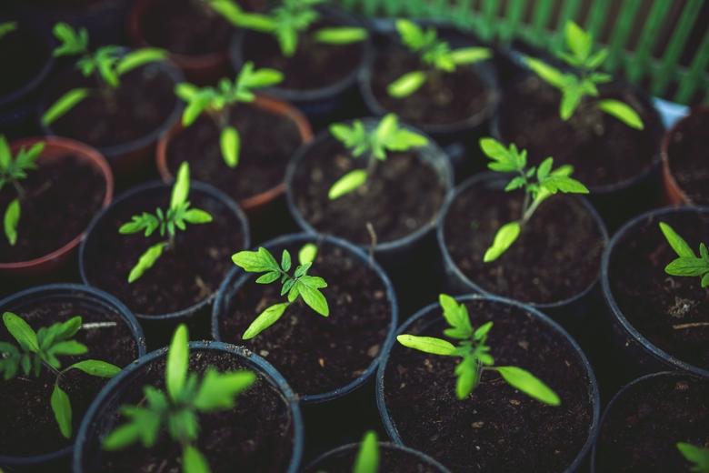 Buying Plants For Garden