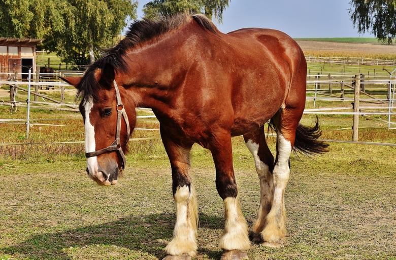 Horses Sunburn